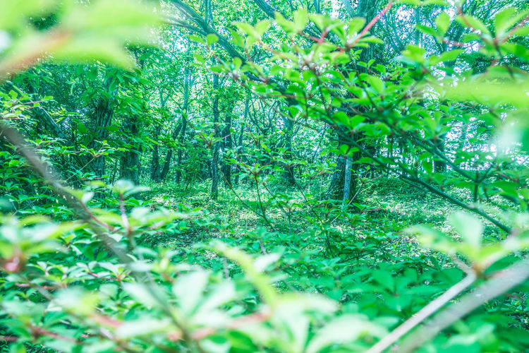 Beauty In Nature Day Freshness Grass Green Color Growth Nature No People Outdoors Plant Selective Focus Tree