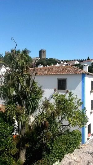 Architecture Building Exterior Built Structure Tree Clear Sky Growth Day Palm Tree Outdoors Residential Building No People Portugal Óbidos  EyeEmNewHere Plant Green Color Nature City Sky