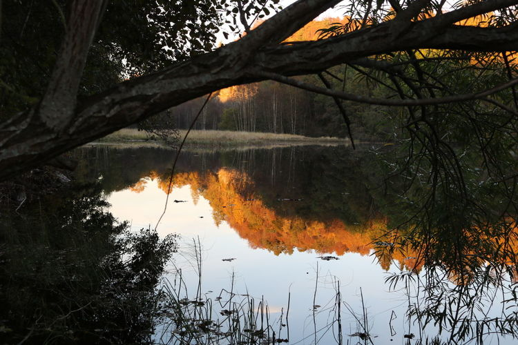 Elvenesvannet Bergen Norway Reflection Tree Lake Water Tree Trunk Branch Nature Calm Scenics Beauty In Nature WoodLand No People Nofilter Noedit Outdoors Autum Reflections Canon Canonphoto Canonphotography Canoneos750d