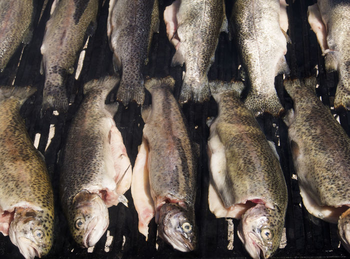 Full frame shot of trout on barbecue grill