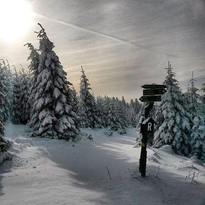 endlich Schnee! Medletik Crosscountry Crosstraining Crosstrainingthüringen langlauf instafit instasport fromwherewetrain thuringia thüringen oberhof grenzadler wachsenrasen rennsteig germany draußenzuhause