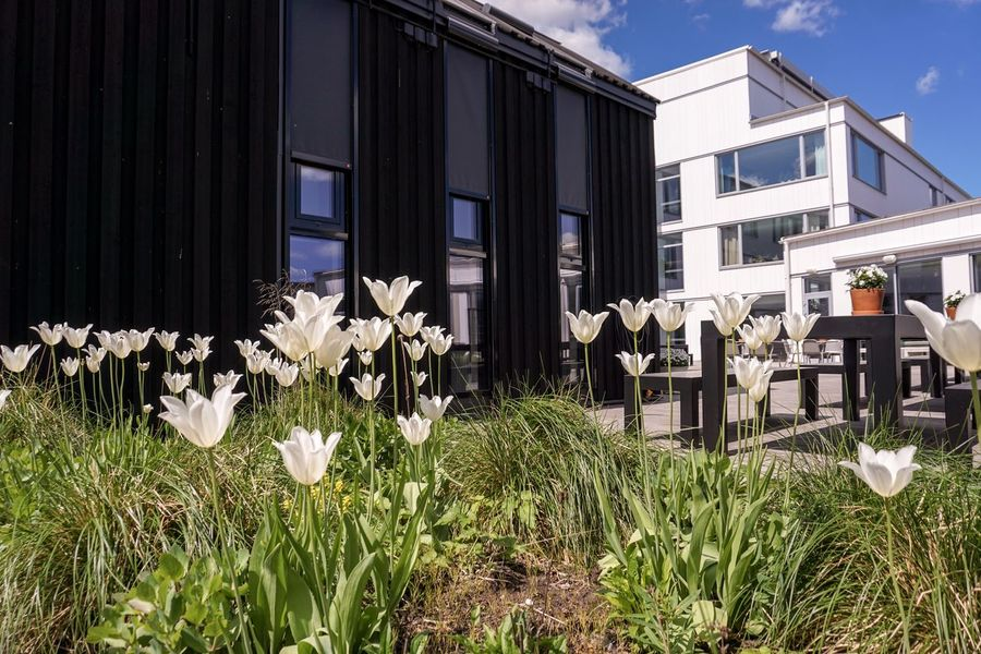 Ikea Hotel Sweden Building Exterior Built Structure Plant Architecture Nature Day Building Flower Sunlight Growth Flowering Plant No People Outdoors Sky Text Field Grass City Land
