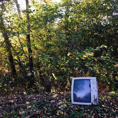 TV Star Tv Star  Everyday Life Trash Bin Auvergne Countryside Tv From My Point Of View From Where I Stand Plant No People Technology Nature Day Television Set Outdoors Green Color Sunlight High Angle View Electrical Equipment Tree Leaf Plant Part Obsolete Screen