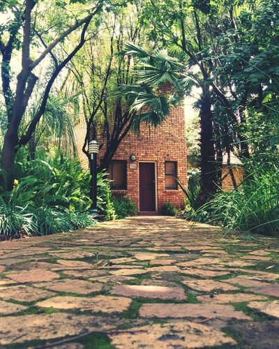 Tree Built Structure No People Building Exterior Architecture Outdoors Day Nature Brick Building Tropical Paradise