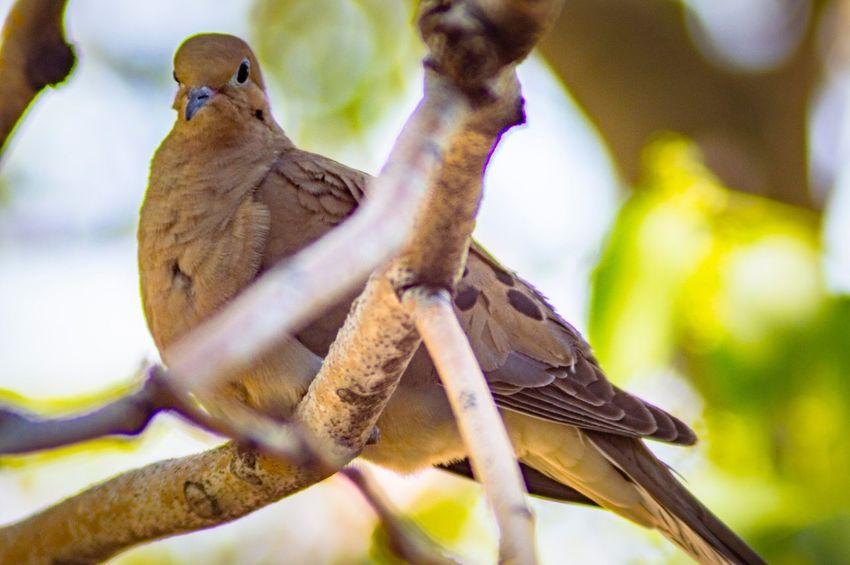EyeEm Selects Animal Wildlife Animal Themes Animal Animals In The Wild Vertebrate Bird Perching Focus On Foreground No People Tree Nature