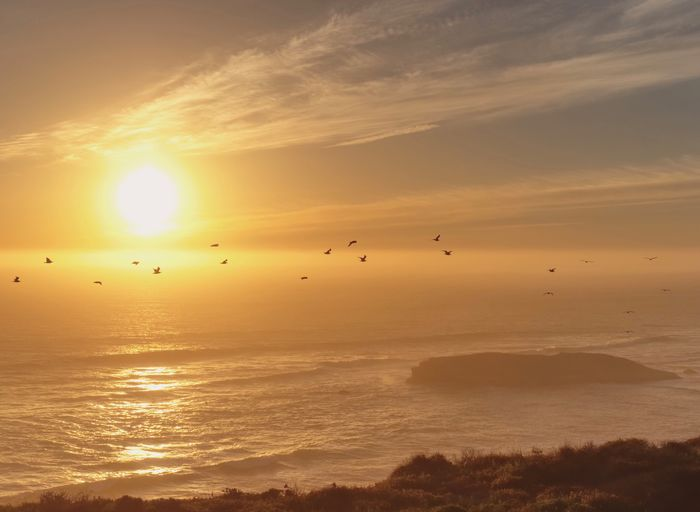 Birds flying in front of beautiful sunset Birds Flying Sunset Beauty In Nature Nature Animals In The Wild Ocean Scenics Landscape Peaceful The Week On EyeEm