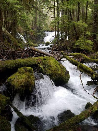 Tree Water Forest Landscape Sky Flowing Water Fallen Tree Stream Flowing