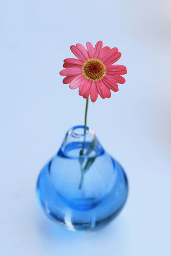 Blomster Kagawa Ajiglass Beauty In Nature Blommor Blue Close-up Colorful Day Fiore Fleur Flores Flower Flower Collection Flower Head Flowers Fragility Freshness Glass Indoors  Nature No People Petal Spring 瀬戸内海