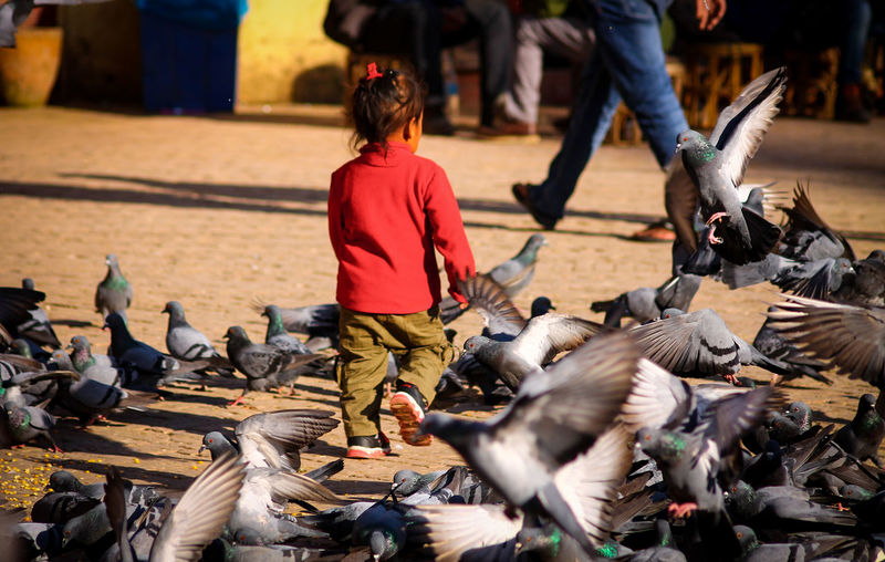 A Child Chasing Pigeons Playing With Pigeons  Birds In The Park Childhood Having Fun People People Photography People Watching Street Photography Eye4photography  Leisure Activity