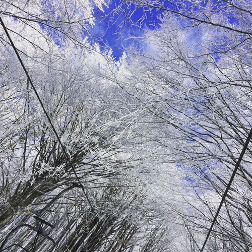 EyeEm Best Shots Snow ❄ Low Angle View Backgrounds Full Frame Nature Day No People Branch First Eyeem Photo EyeEmNewHere