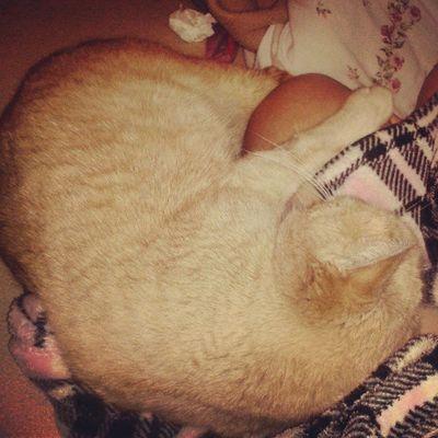I love mommy! Cats Love