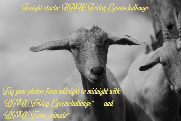 BNW_farm_animals Bnw_friday_eyeemchallenge