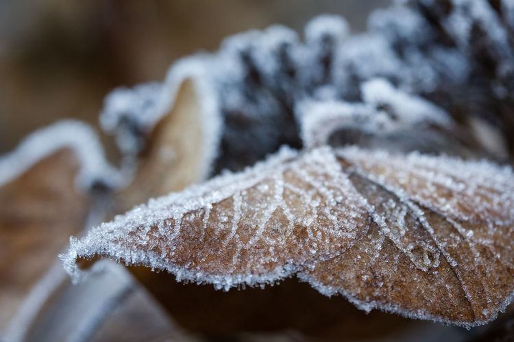 Close-up Cold Temperature Winter Snow Frozen No People Frost Nature Focus On Foreground Ice Food And Drink Day Food Selective Focus Plant White Color Tree Plant Part Beauty In Nature Coniferous Tree EyeEmNewHere