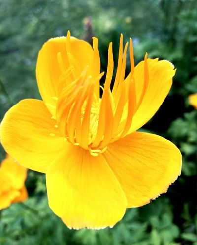 Flower Petal Nature Flower Head Freshness Fragility Plant Botany Blossom Beauty In Nature Yellow Outdoors Close-up Uncultivated Growth Springtime Stamen Day Beauty No People Sommergefühle Paint The Town Yellow