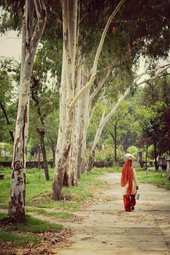 Honestly the women of India are incredibleNature India Girl Power Woman Power The Street Photographer - 2015 EyeEm Awards Learn & Shoot: Leading Lines Tall Trees White Tree Trunks Walking In The Woods Women Around The World