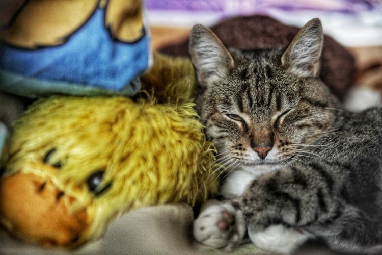 cat Photography Photo Photographer Animal Animal Themes Sleep Photooftheday House Cat Peps