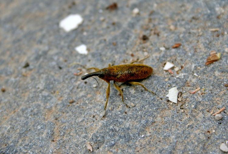 Weevil Garden