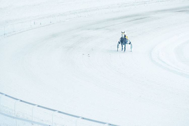 Man riding horse cart on snow during winter