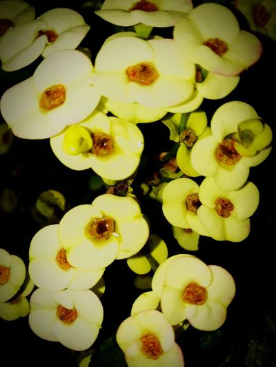 just around the house Flower Head Flower Yellow Fruit Orchid Water Close-up In Bloom Botany Blossom Plant Life
