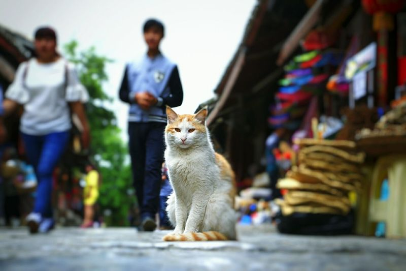 Old House Old Town China,Guizhou Old Buildings China Photos China View Peoples Guiyang China China 's Charm China Culture Cat Animal
