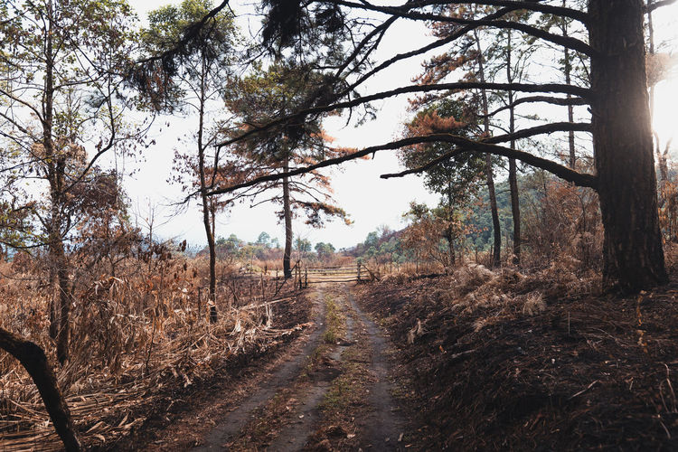 Dirt road amidst trees and plants in forest