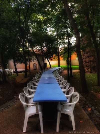 The Week On EyeEm Tree Chair Table Outdoors Growth Day Empty Absence No People Nature Grass Beauty In Nature The last supper