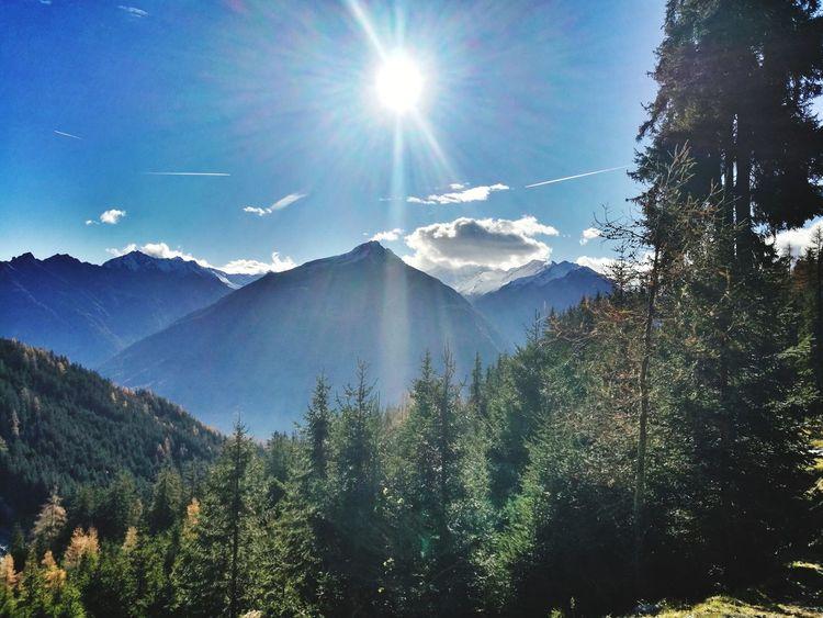 Oberhalb der Baum-Grenze fangen meine Abenteuer an 🌲👣 Tree Mountain Forest Pine Tree Pinaceae Sunlight Sun WoodLand Spruce Tree Sky
