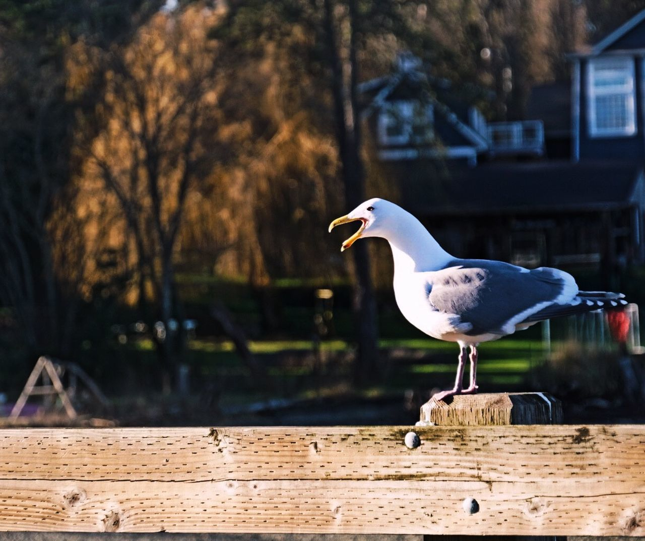 Close-Up Of Seagull Perching On Fence
