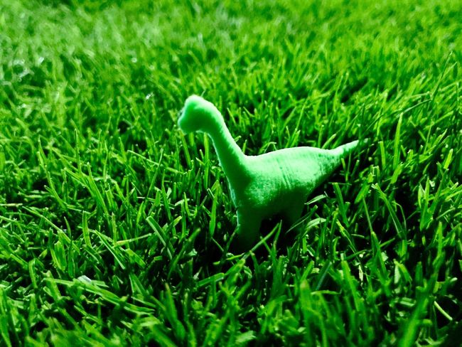At last i found a Dinosaur.... Green Color Grass Field Selective Focus One Animal Nature No People Growth Day Animal Themes Outdoors Bird Close-up The Portraitist - 2017 EyeEm Awards The Architect - 2017 EyeEm Awards The Great Outdoors - 2017 EyeEm Awards The Street Photographer - 2017 EyeEm Awards The Photojournalist - 2017 EyeEm Awards High Angle View Full Frame Beauty In Nature EyeEmNewHere Backgrounds Environmental Issues Large Group Of Objects BYOPaper!