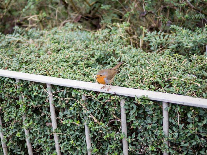 Close-up of small bird on land