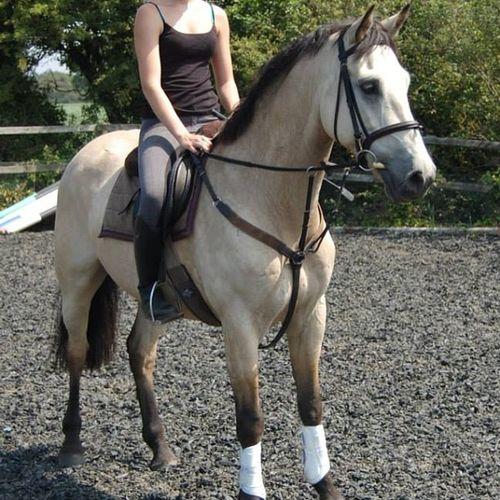 He is soooo pretty Equestrian Horseriding Horse