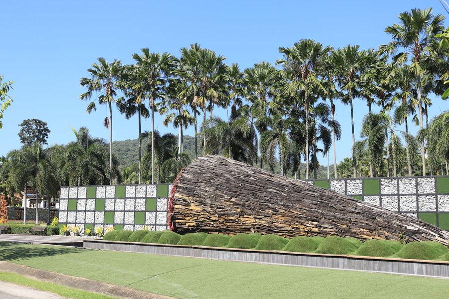 อุทยานหลวงราชพฤกษ์ อุทยานหลวงราชพฤกษ์ ราชพฤกษ์ Tree Plant Sky Architecture Built Structure Grass Green Color Nature Growth Day No People Sunlight Building Exterior Field Land Clear Sky Tropical Climate Building Blue Palm Tree Outdoors Cottage