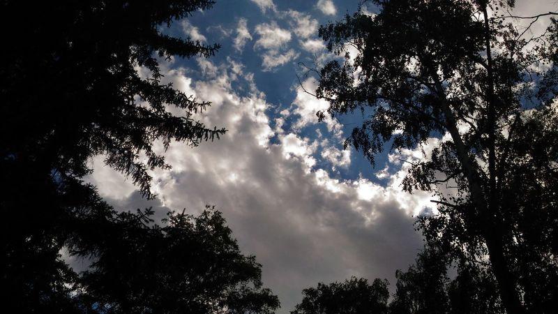 Chaotic sky Sky Clouds And Sky Cloud - Sky Cloudy Sky Sky Trees And Clouds