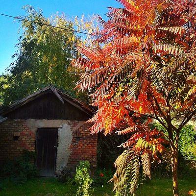 Autumn Fall Pupinova Ilovezr jesenumomsokaku