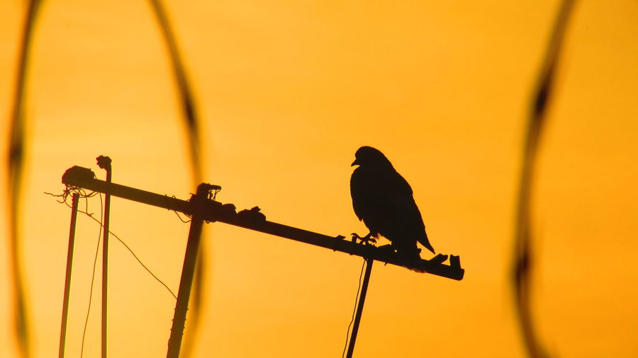 Silhouette of bird perching on railing