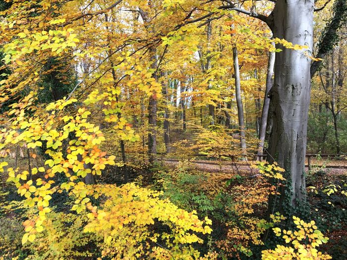 Herbstlaub Leaves Autumn Leaves Plant Day No People Yellow Growth Nature Flower Flowering Plant Beauty In Nature Sunlight Outdoors Tree
