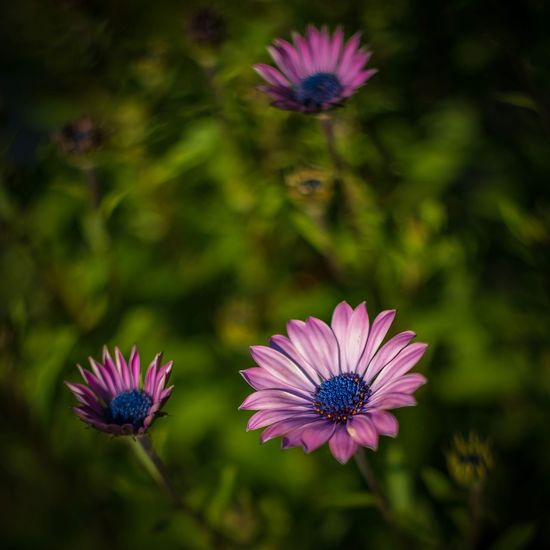 Flowering Plant Flower Freshness Plant Fragility Vulnerability  Petal Growth Flower Head Inflorescence Beauty In Nature Close-up Purple Nature No People Focus On Foreground Day Pollen