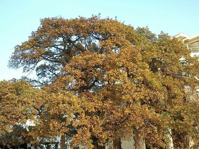 Tree Leafage Foliage Autumn Automne Feuillage осень листва Arbre дерево