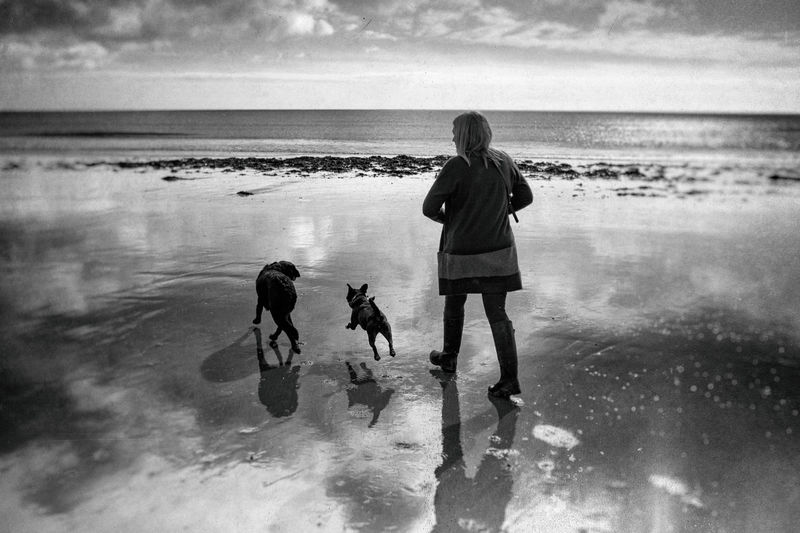 Woman with dogs walking on sea shore at beach