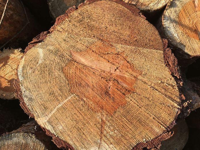 Log Tree Ring