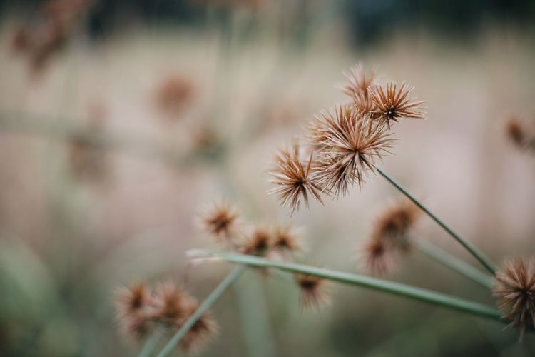 Backgrounds Beauty In Nature Close-up Flower Flower Head Flowering Plant Growth Nature Plant