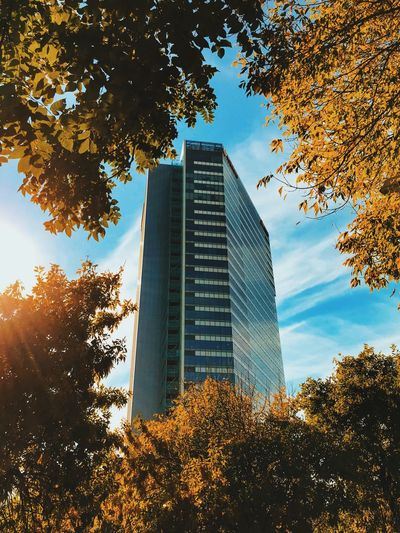 Tree Low Angle View Architecture Skyscraper Autumn Leaf Growth Building Exterior Sky Built Structure No People Day Modern Change Branch Outdoors Nature Bucharest Globalworth Vodafone  Vodafone Romania Towe Bucureşti Globalworth Tower #urbanana: The Urban Playground