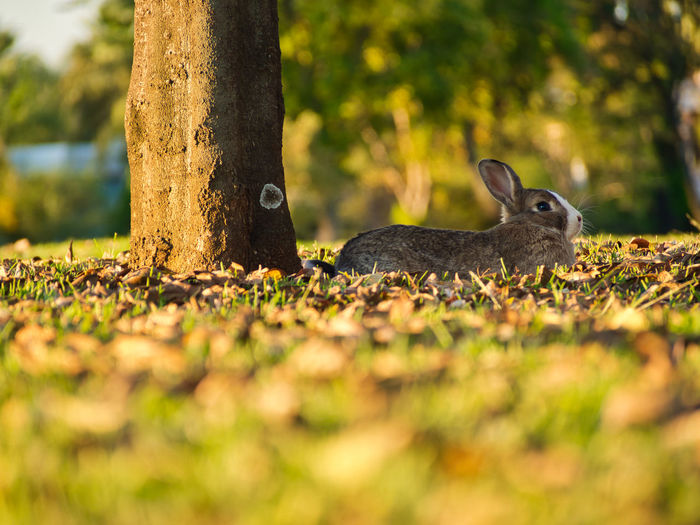 Close-up of rabbit on grass by tree trunk