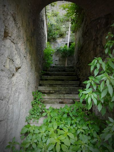 Green Color Green Beauty In Nature EyeEm Nature Lover Emotion EyeEm Best Shots Clouse-up Architecture_nature Silence Tranquil Scene Nature Abandoned Abandoned Places Abandoned Garden Architecture Calm Tranquility Stairs