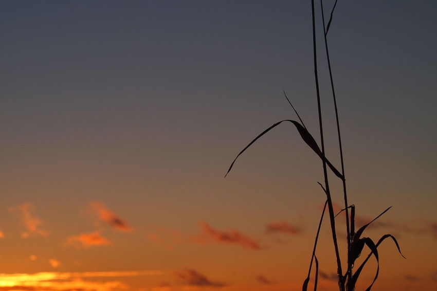 Beauty In Nature Close-up Day Growth Nature No People Outdoors Plant Sky Sunset Tranquility
