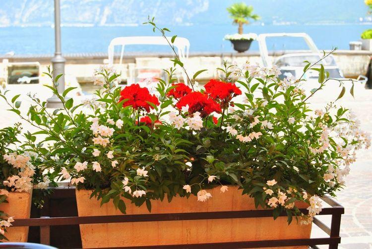 Flower Flower Head Sea Beach Water Summer Red Springtime Flowerbed Sky