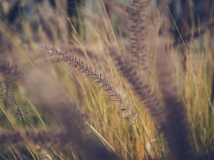 Backgrounds Beauty In Nature Close-up Day Freshness Grass Growth Nature No People Outdoors Plant Rural Scene Selective Focus Tranquility Peace And Quiet Peace Tranquil Scene The Week On EyeEm