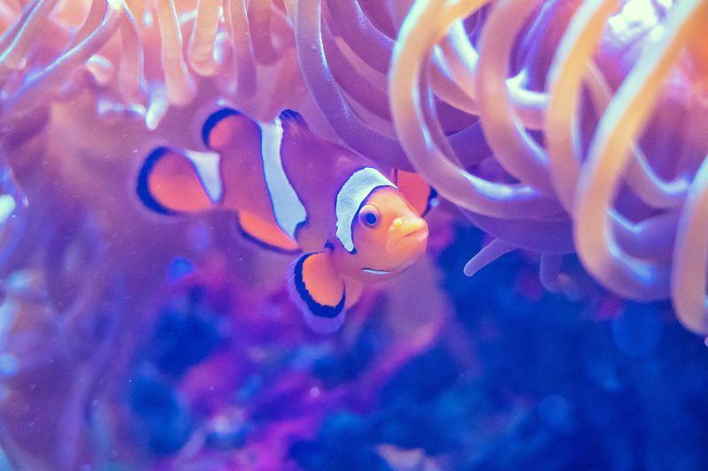 Nemo Travel