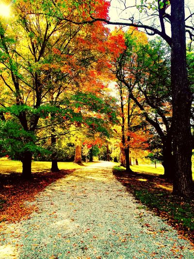 Happy fall 🍂🍂 EyeEm Nature Lover Nature_collection Landscape_Collection The Great Outdoors - 2016 EyeEm Awards