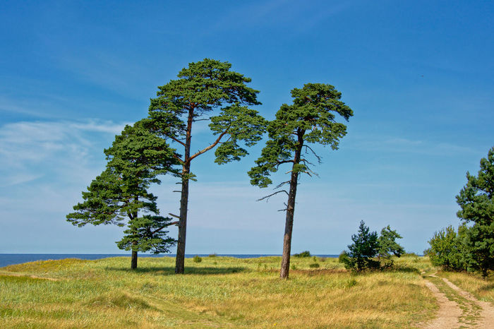 Karosta landscape with pine trees on a sunny day with clear blue sky along the beach of the Baltic sea at Liepaja, Latvia Baltic Sea Balticsea Coastline Hiking Latvia Liepaja Nature Road Sunny Wanderlust Adveenture Beauty In Nature Blue Sky Coastal Day Environment Karosta Landscape Pine Tree Plant Sea Summer Tourism Tranquil Scene Tranquility